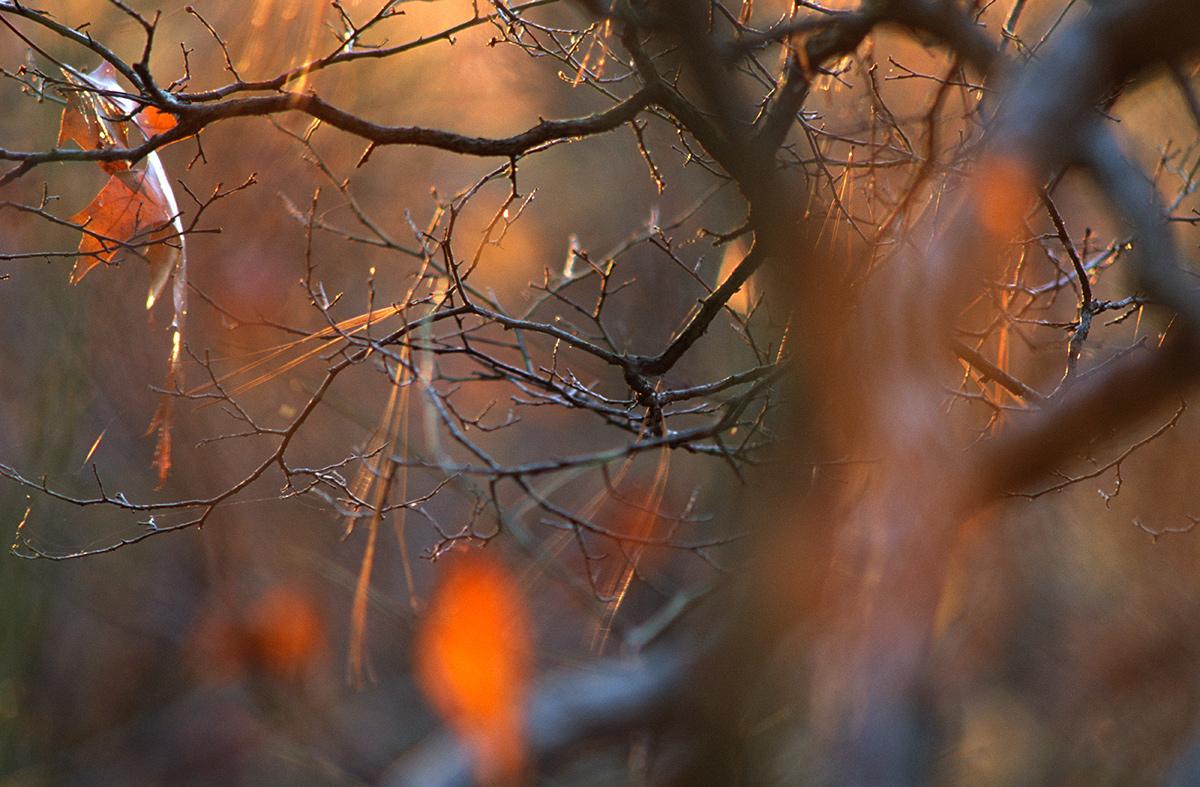 Autumnal,  Raymond,  1997